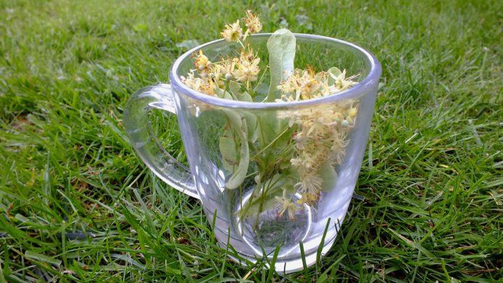 herbs-1823966_1920